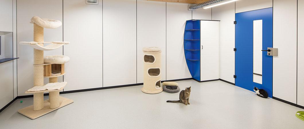 Компакт-плиты в декоре Белый премиум и акцентные цвета в комнатах для кошек.