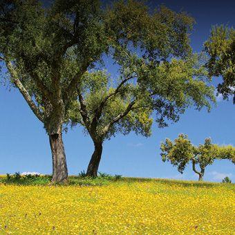 Les revêtements de sol EGGERComfort sont des sols en liège exempts de substances nocives
