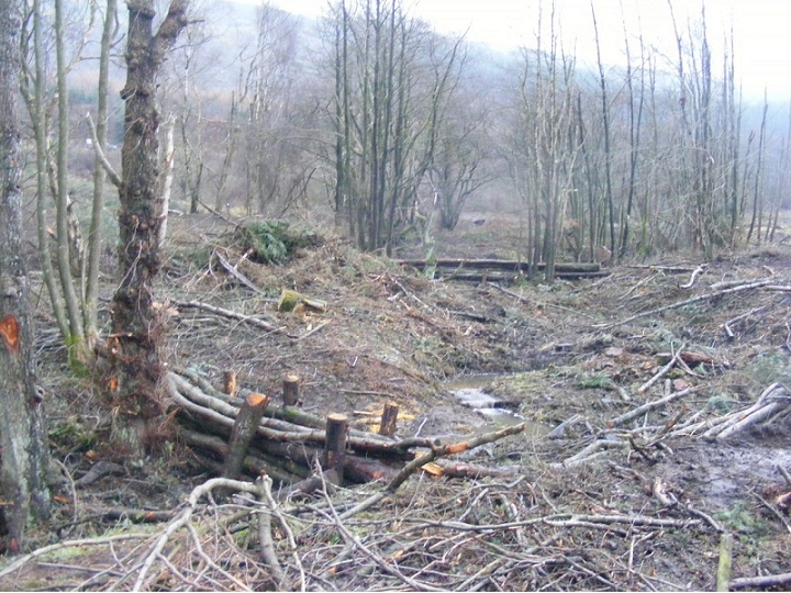 EGGER Forestry in partnership approach to improve river health