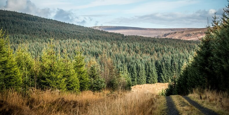 Despite the immense Kielder Forest, tree cover is just 8 per cent in Northumberland, lower than the rest of England