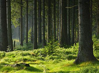 Udržitelné lesní hospodářství