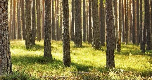 Timberpak si mediul