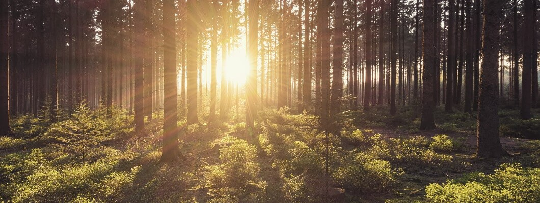 EGGER Forestry - Timber Harvesting and Marketing Services