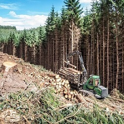 Forestry News
