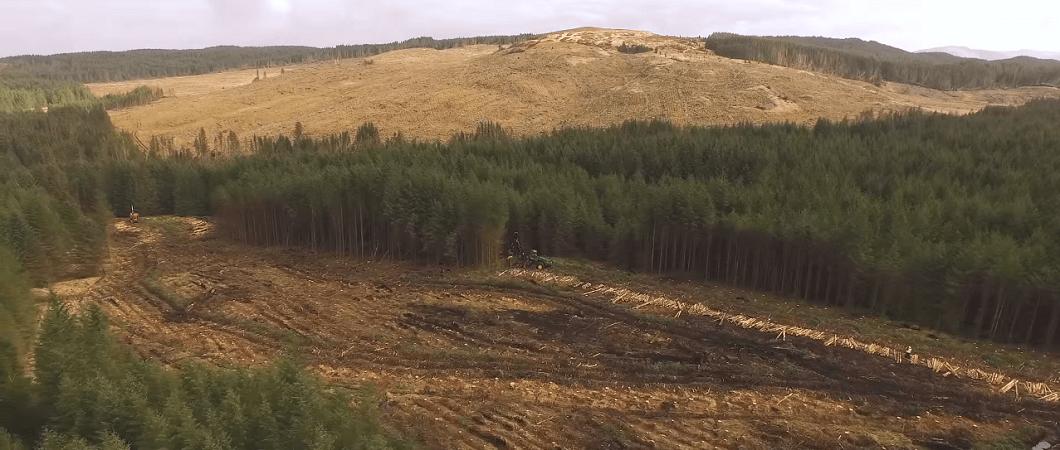 EGGER Timber Harvesting Case Study - East Strone