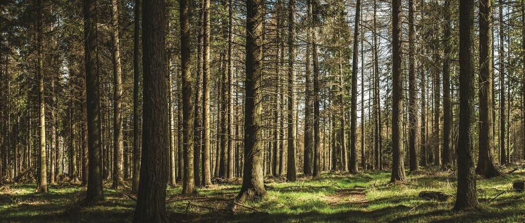 EGGER Forestry Ltd