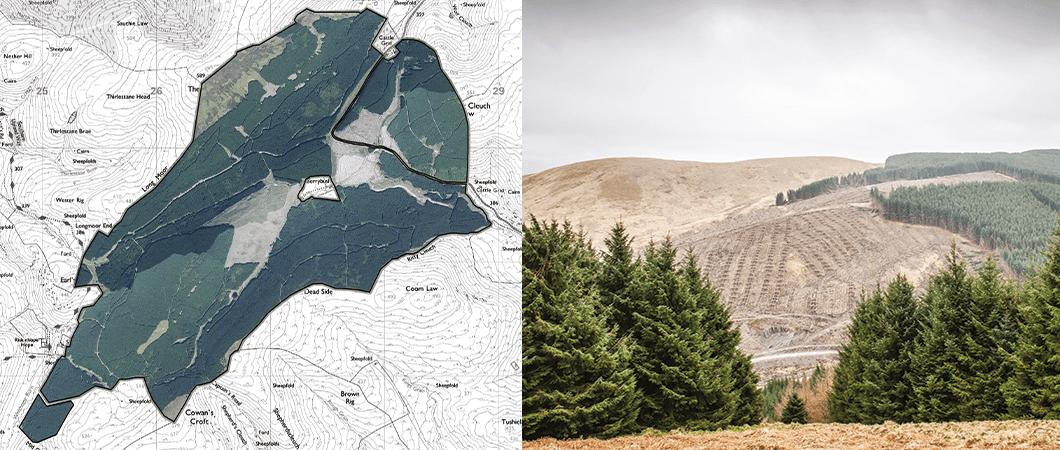 Forest Management Case Study - Berrybush