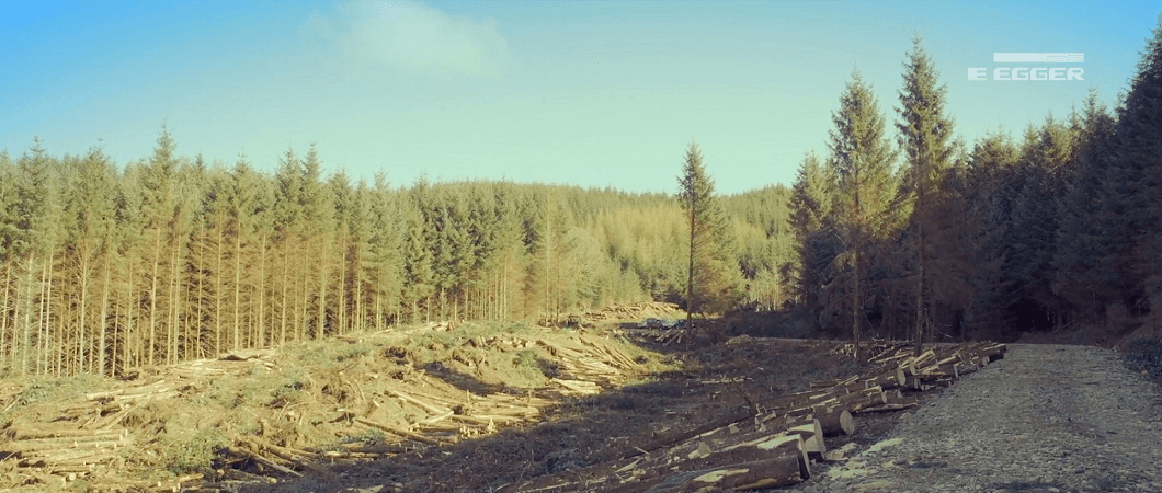 Integrated Harvesting and Forest Management - Prince of Wales Woodlands