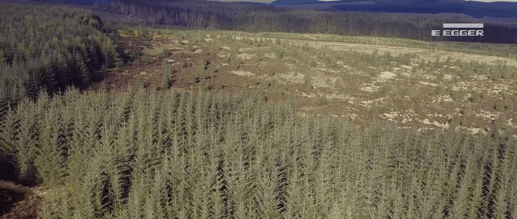 Timber Harvesting Case Study - Tamshiel Rig
