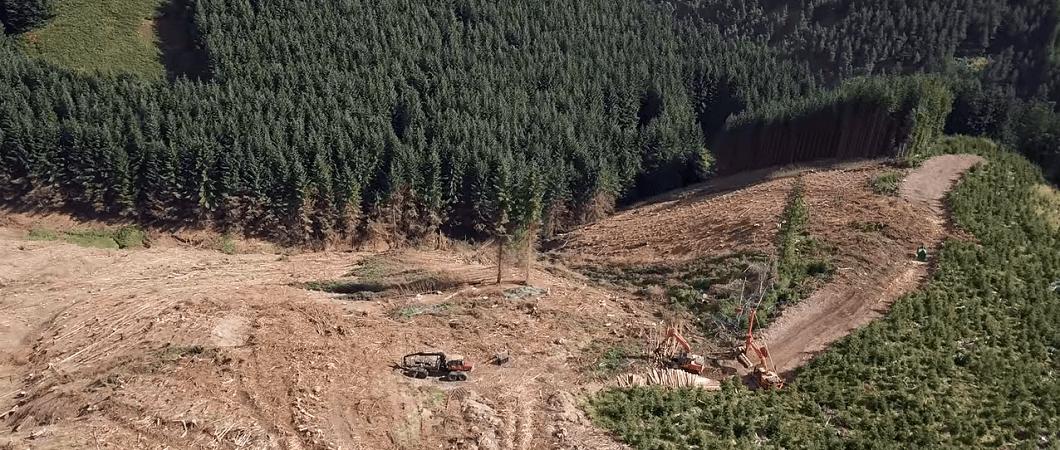 EGGER Harvesting case study – Kidland Forest Complex