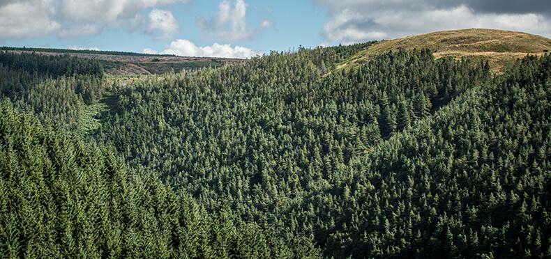 EGGER Forestry News