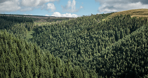 forestry case studies