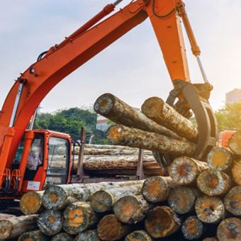 La madera y su gestión