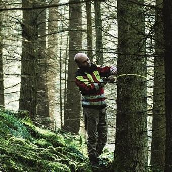 EGGER Forestry