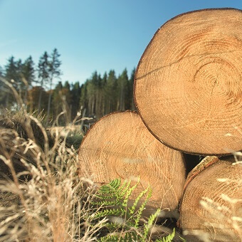 Wood Purchasing
