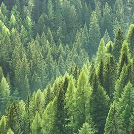 Umwelt & Nachhaltigkeit bei EGGER
