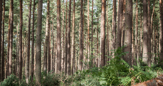 EGGER Forestry Contact Us