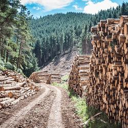 EGGER Forestry Case Studies