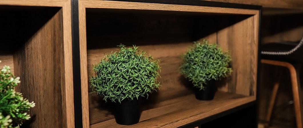 Зеленые растения привносят уют в интерьер.