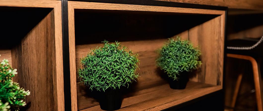 Pokojové rostliny vytvářejí pocit útulného domova