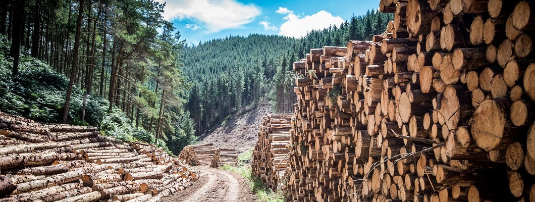 """""""Wood is far too valuable to just throw it away"""" Fritz Egger Senior, Founder"""