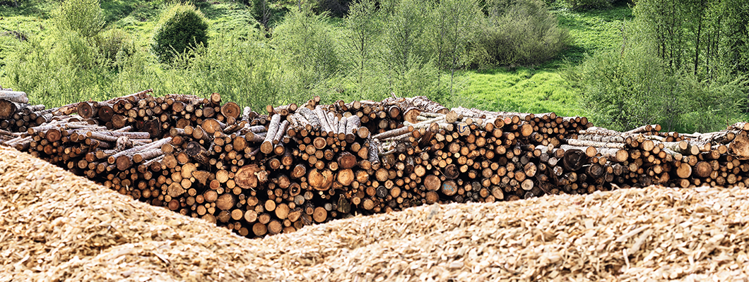 02PI_CO_NA_sustainability_report_forest_log_yard_01b.png
