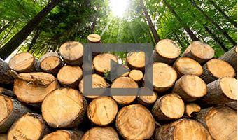 Transparent ist das neue Grün: Nachhaltigkeitsindikatoren der EGGER Bauprodukte