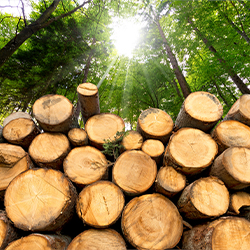 Our sustainability indicators