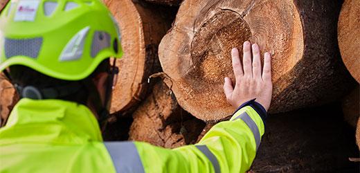 «Лучшее из дерева» означает еще большую прозрачность деятельности.